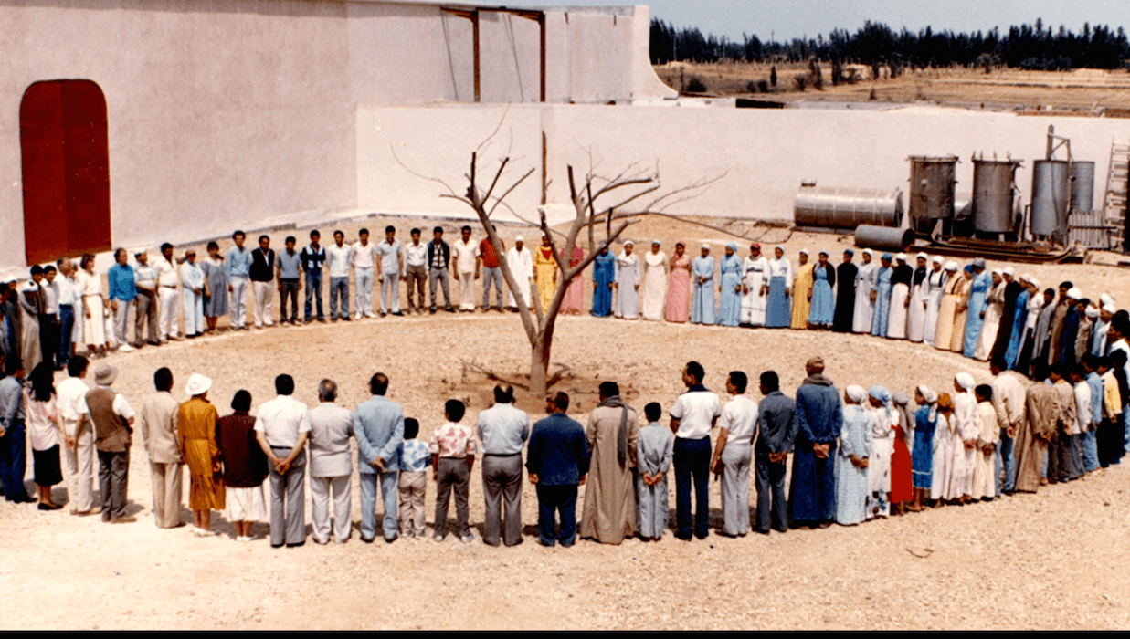 Egypt Sekem Tree BEFORE 1980