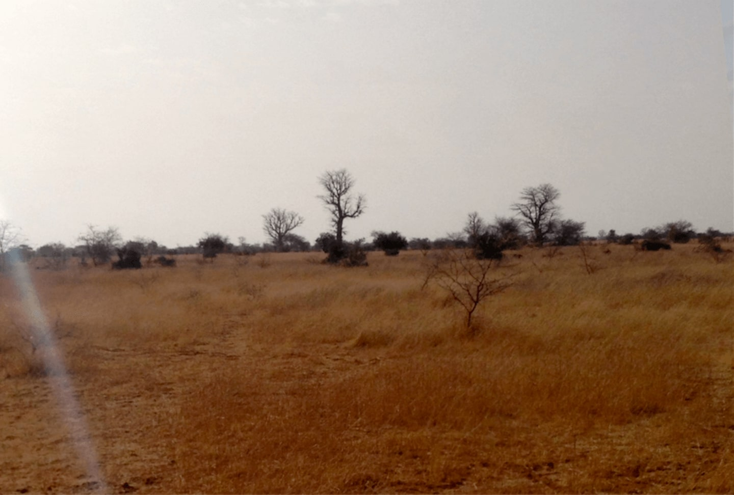 Landscape with rainfall and without - Senegal 2